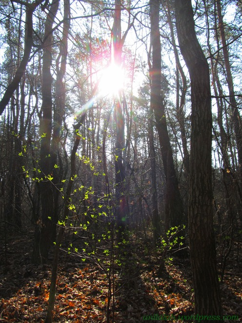 las, Bród. drzewko młode listki, słońce, kol 8755